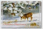 Logo Branded Winter's Solitude Greeting Card